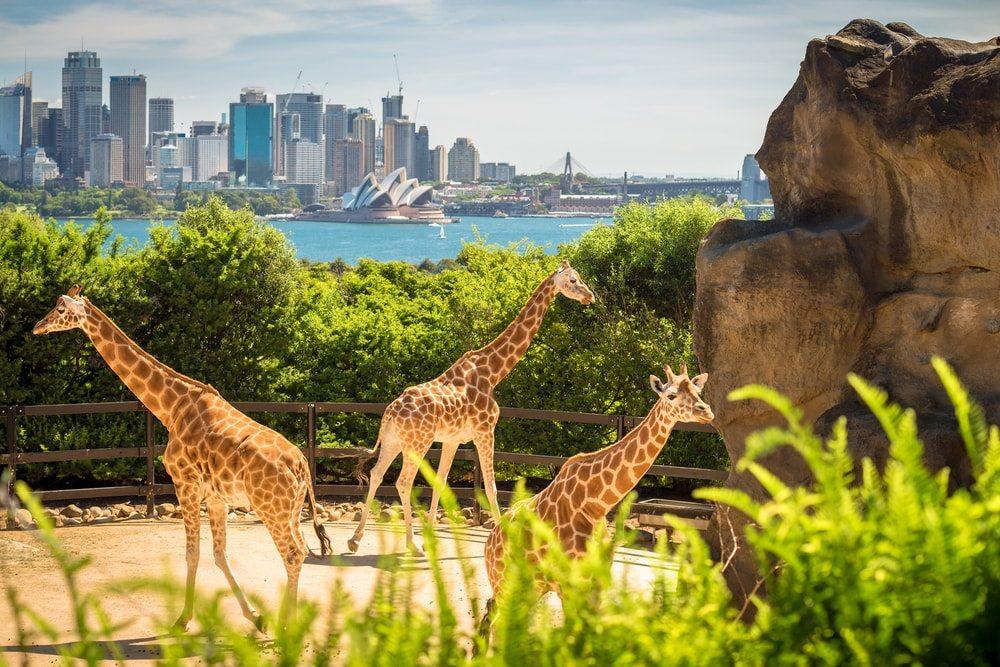 Ausztrália és Új-Zéland 185.900 Ft-tól