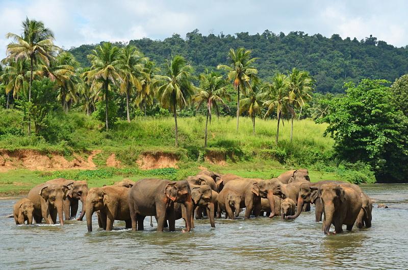 Srí Lanka: útmutató a könnycsepp alakú szigethez