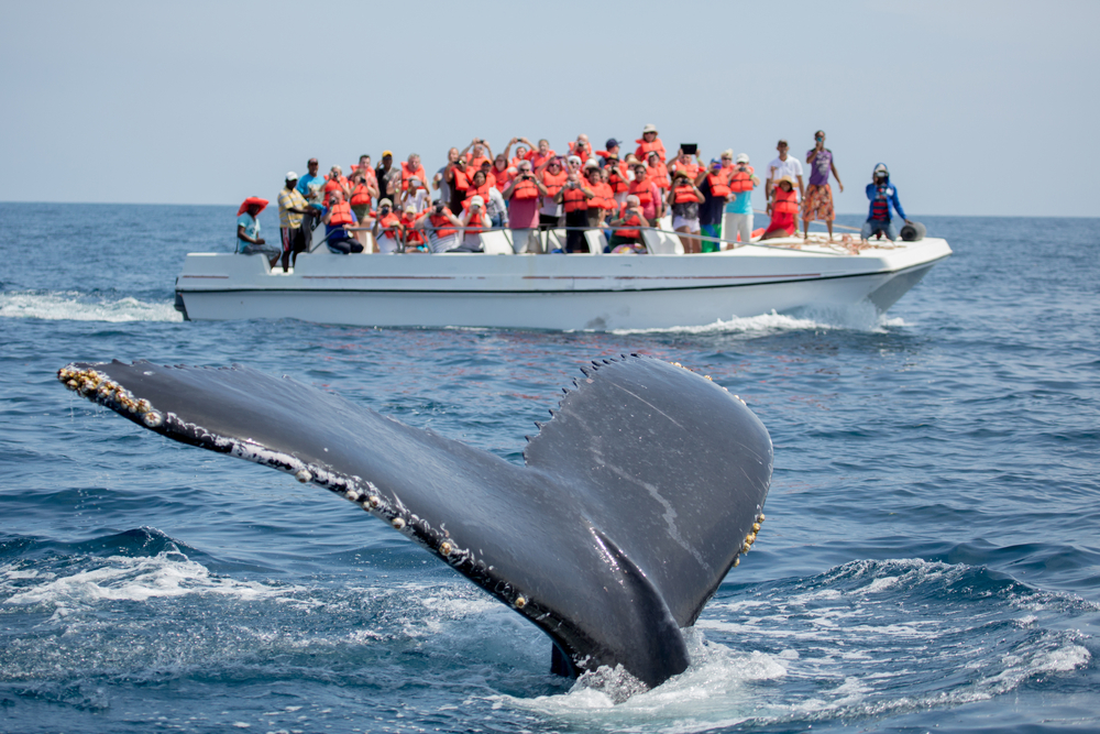 Karantén és teszt nélkül: Punta Cana
